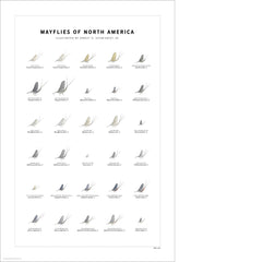 Mayflies of North America Print Set