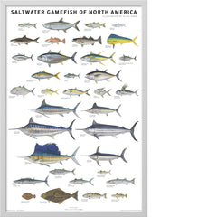 Saltwater Gamefish of North America Poster