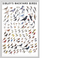 Sibley's Backyard Birds of Eastern North America Poster
