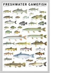 Freshwater Gamefish of North America Poster