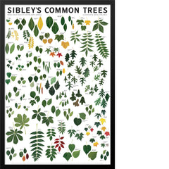 Sibley's Common Trees of Eastern North America Poster