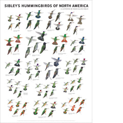 Sibley's Hummingbirds of North America Poster