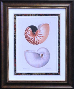 L00705 - Seashell Lithographs
