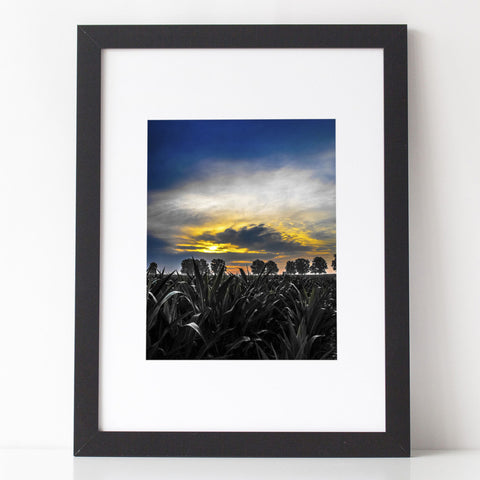 Art Print - 'Awaiting Sun's Light' Cornfield landscape photography
