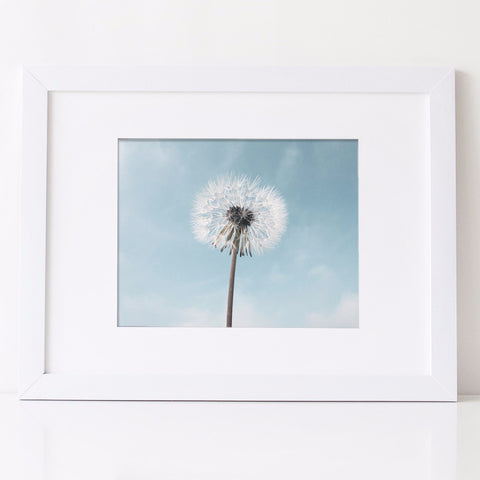 Dandelion Photography Art Print in pale blue and white