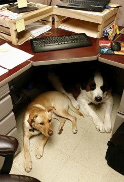 Companies: Why Should You Host Take Your Dog to Work Day & How Can It Benefit Your Business?