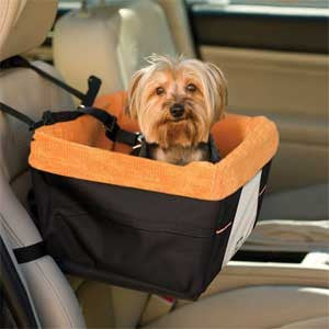 On the Road with Rover this Summer? Here's Some Pet Travel Advice!