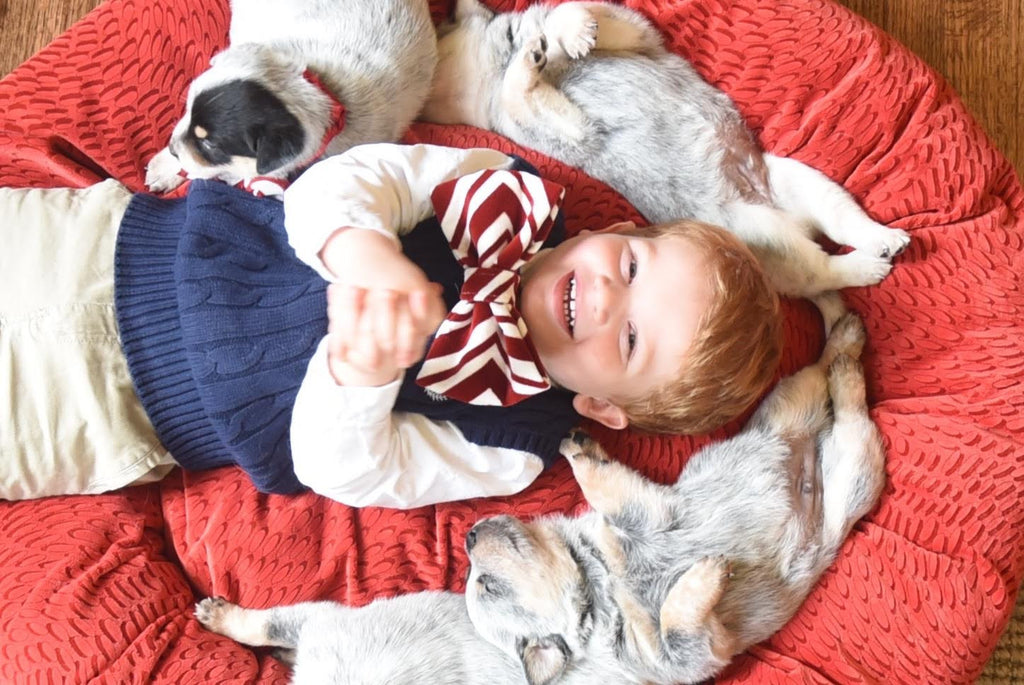 Do My Children Know How to Interact with Dogs and Cats?
