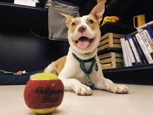3 Pawesome Benefits of Bringing Your Dog to Work
