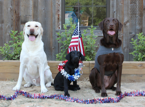 Fun on the Fourth for the Whole Family: Keeping Your Dog Safe Around Fireworks