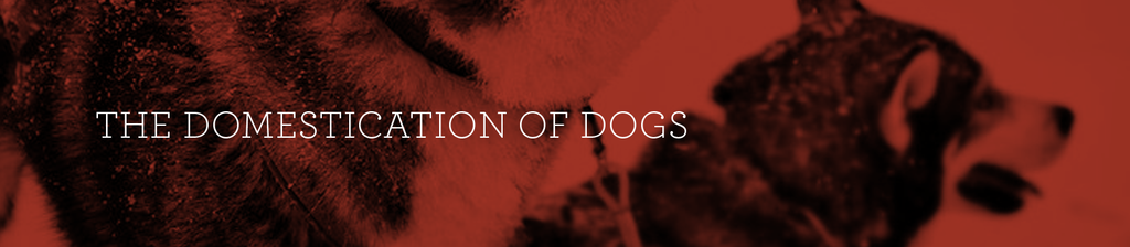 A Few Fun Facts about the Domestication of Dogs