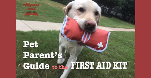 Pet Parent's Guide to the First Aid Kit