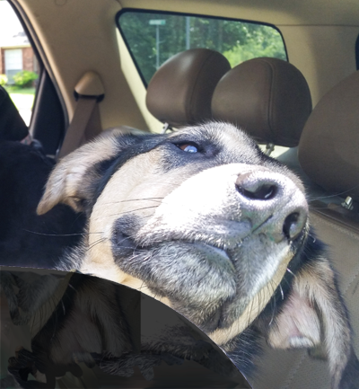 Good Samaritans Can Now Rescue Dogs from Hot Cars in TN with Passing of New Law