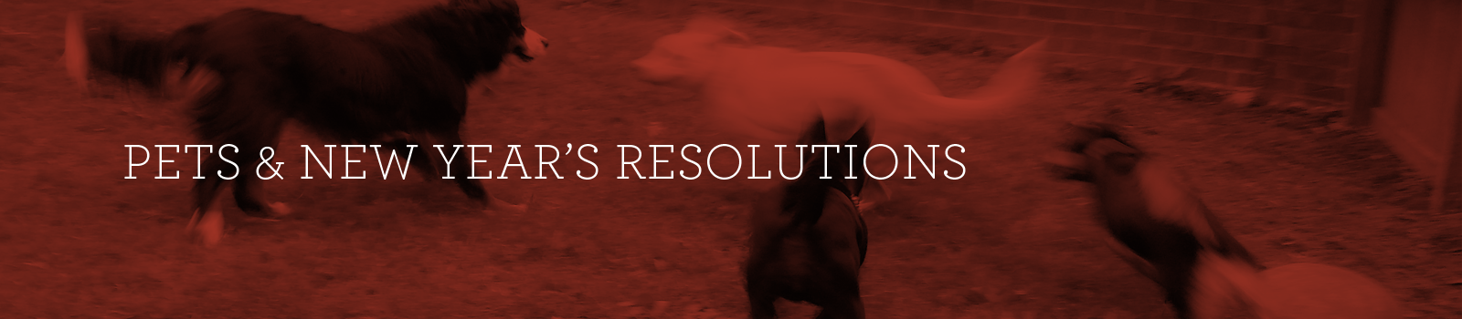 Our Pets Have New Year's Resolutions, Too!