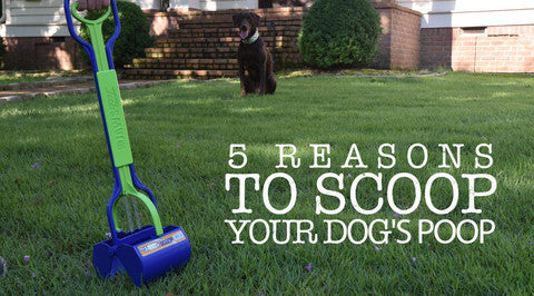 5 Reasons to Scoop Your Dog's Poop