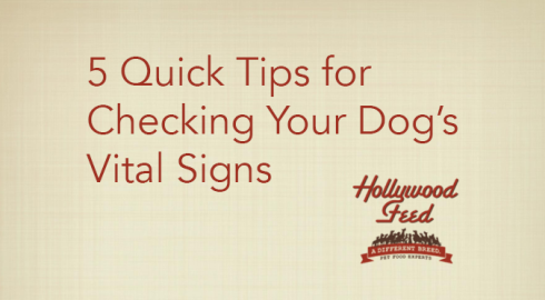 5 Quick Tips for Checking Your Dog's Vital Signs
