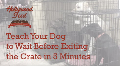 Teach Your Dog to Wait Before Exiting the Crate in 5 Minutes