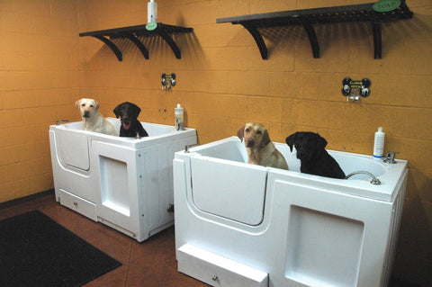 Self serve dog wash hollywood feed we provide dryers for your convenience but sometimes a good towel drying then air drying is best hot air can cause your dogs skin to dry out and in turn solutioingenieria Image collections