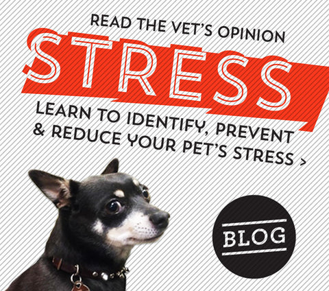 A vet's opinion. Learn to identify, prevent, and reduce your pet's stress.
