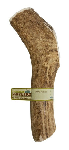 Hollywood Feed - Prairie Dog Deer Antler - Antler - 1