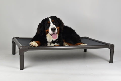 Hollywood Feed - Kuranda® Bed - Extra Large - Cot/Elevated Bed