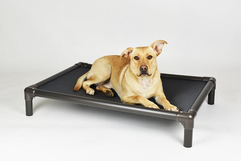 Hollywood Feed - Kuranda® Bed - Large - Cot/Elevated Bed