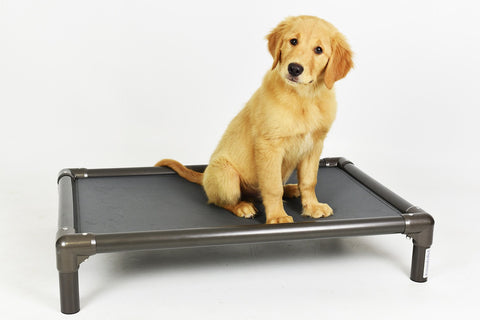 Hollywood Feed - Kuranda® Bed - Medium - Cot/Elevated Bed