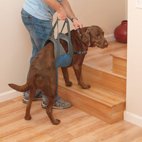 Hollywood Feed - Kurgo Up And About Dog Carrier - Mobility - 1