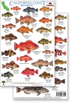 California Coast Rockfish ID Guide