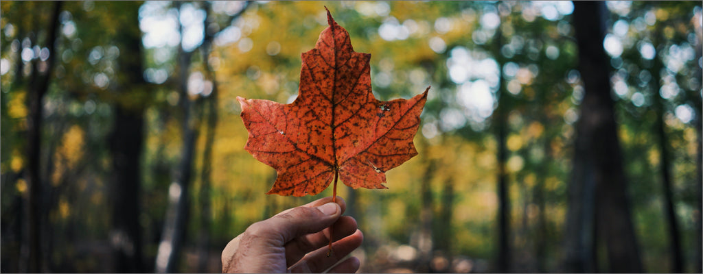 A Canadian maple leaf held by a hand promoting clothing made in canada