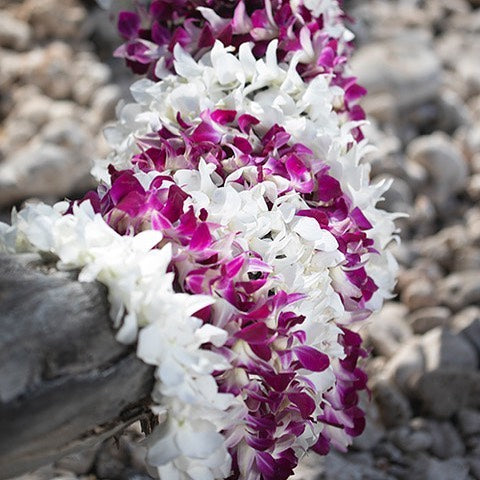 graduation lei, graduation leis, Leis in Bulk, real hawaiian leis, leis from hawaii, fresh leis delivered, leis shipped to mainland, leis in bulk, graduation leis, cheap leis