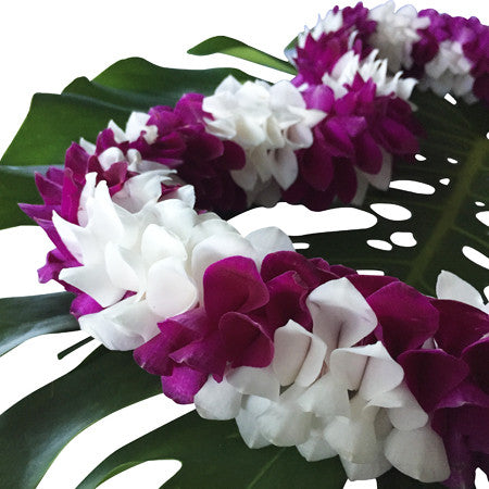 graduation leis, leis cheap for graduation, lei from hawaii,  Leis in Bulk, real hawaiian leis, leis from hawaii, fresh leis delivered, leis shipped to mainland, fresh orchid leis