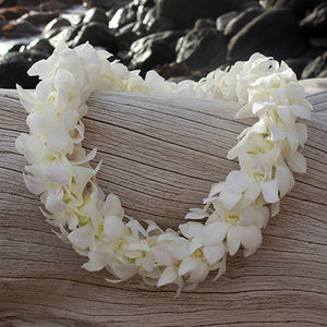 Hawaiian orchid Lei fresh lei hawaiian leis orchid lei fresh orchid leis leis from hawaii delivered leis shipped