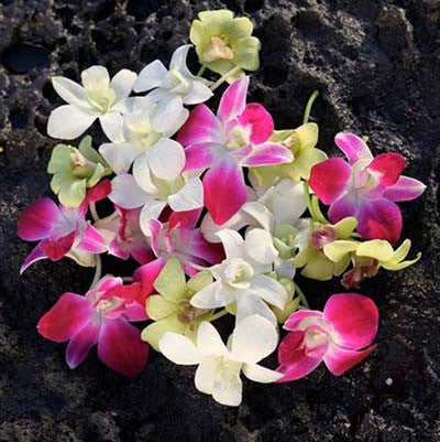 Mixed Loose Orchid Blooms (100 pieces)