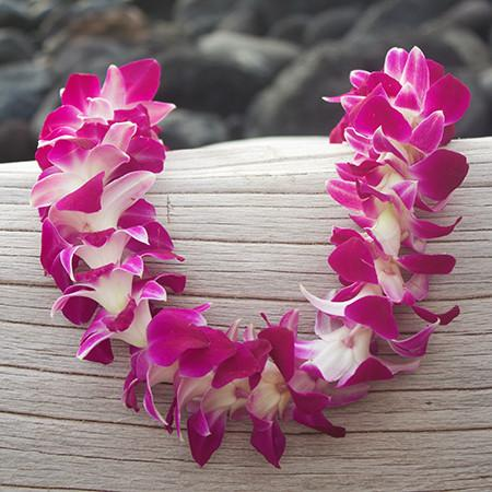 graduation leis, leis cheap for graduation, lei from hawaii,  Leis in Bulk, real hawaiian leis, leis from hawaii, fresh leis delivered, leis shipped to mainland, fresh orchid leis.