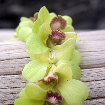 Green Orchid Lei