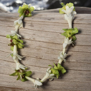 Tuberose with green Orchid Lei