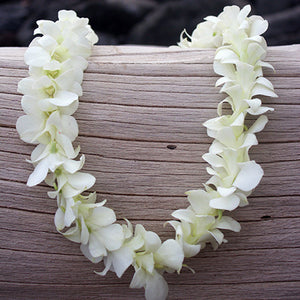 Single white Orchid Lei - SUPERSAVER