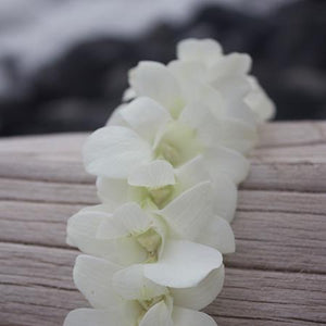 white orchid lei, graduation Lei, hawaiian lei, fresh lei from hawaii