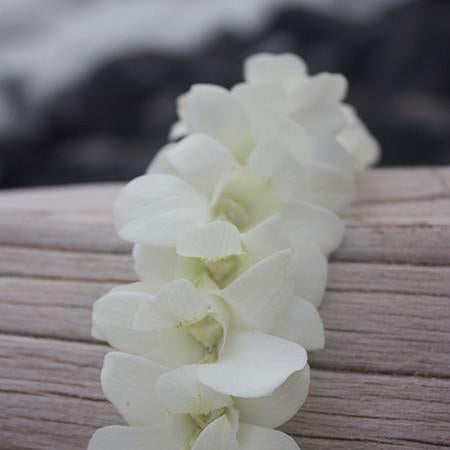 graduation lei, graduation leis, leis for graduation, white orchid lei, graduation Lei, hawaiian lei, fresh leis from hawaii, leis in bulk, free shipping, real flower leis delivered, hawaiian leis shipped