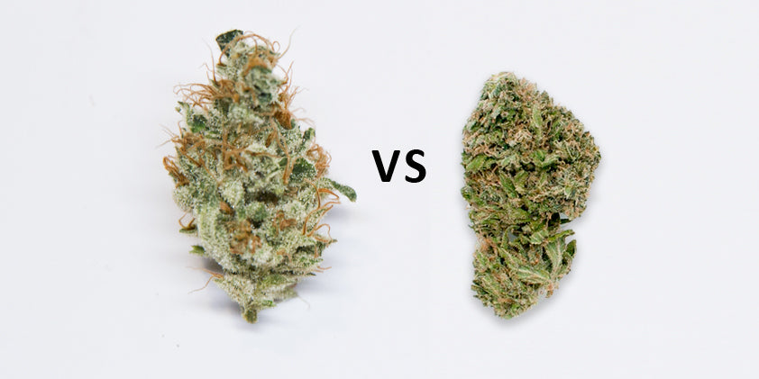 Good vs Bad Weed: How to Evaluate Quality – Black Rock ...