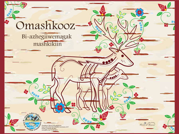 Great Lakes Indian Fish and Wildlife Commission (GLIFWC) celebrates the return of the Omashkooz (elk) with collaboration with House of Howes