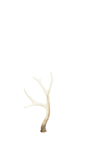 LARGE NATURAL RESIN ANTLER DECORATION