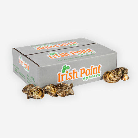 Irish Point Oysters