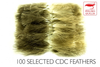 Polish Selected CDC - 100 pcs
