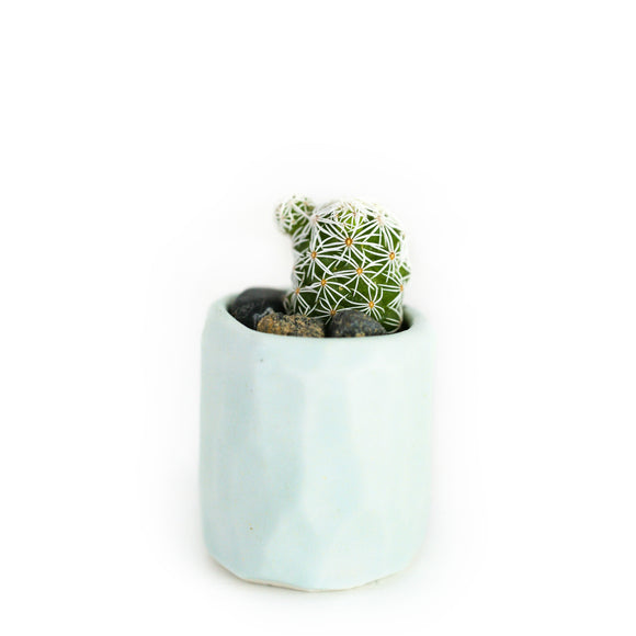Mini Cactus Kit-Blue