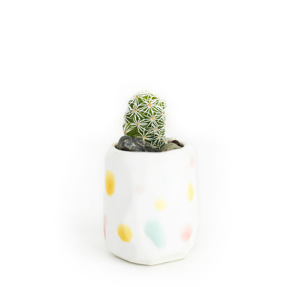 Mini Cactus Kit-Confetti (limited edition)