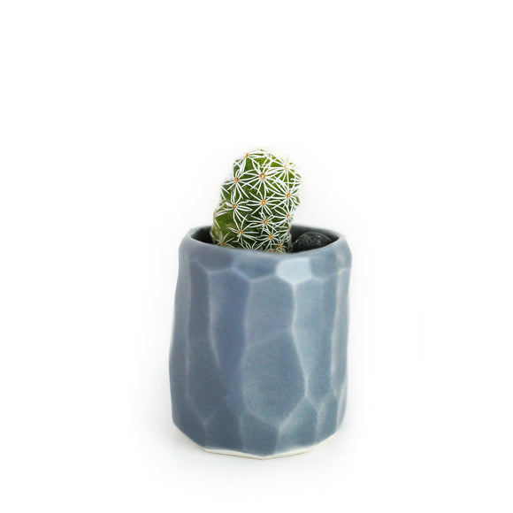 Mini Cactus Kit-Grey