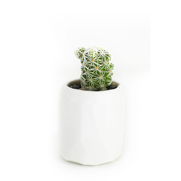 Mini Cactus Kit-White