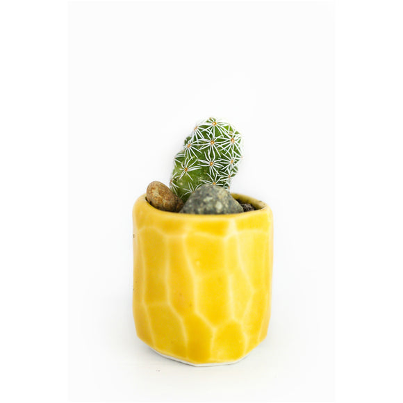 Mini Cactus Kit-Yellow